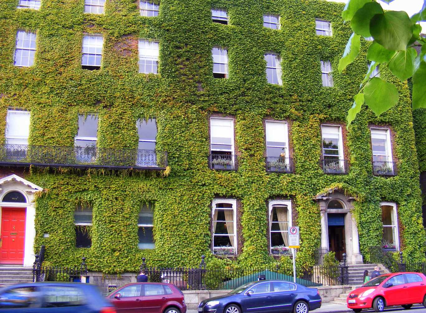 Ivy on St Stephen's Green